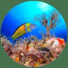 Diving on La Palma