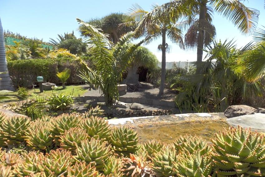 Spanien - Kanarische Inseln - La Palma - La Punta - Casa Las Vetas - Tropischer Garten mit Seerosenteich und kleinem Wasserfall